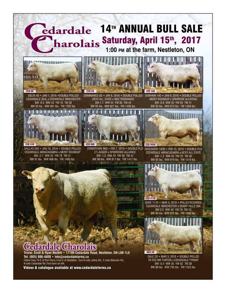 2017 Bull Sale Flyter
