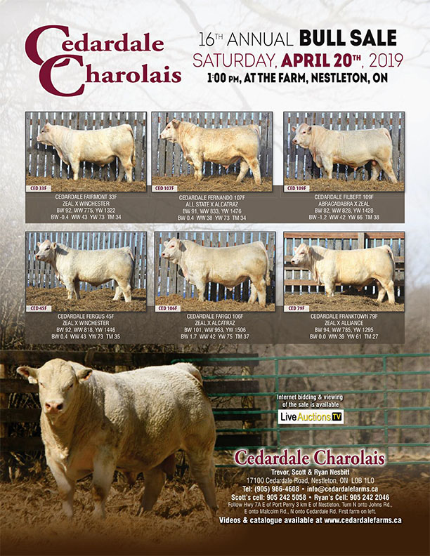 2019 Bull Sale Poster