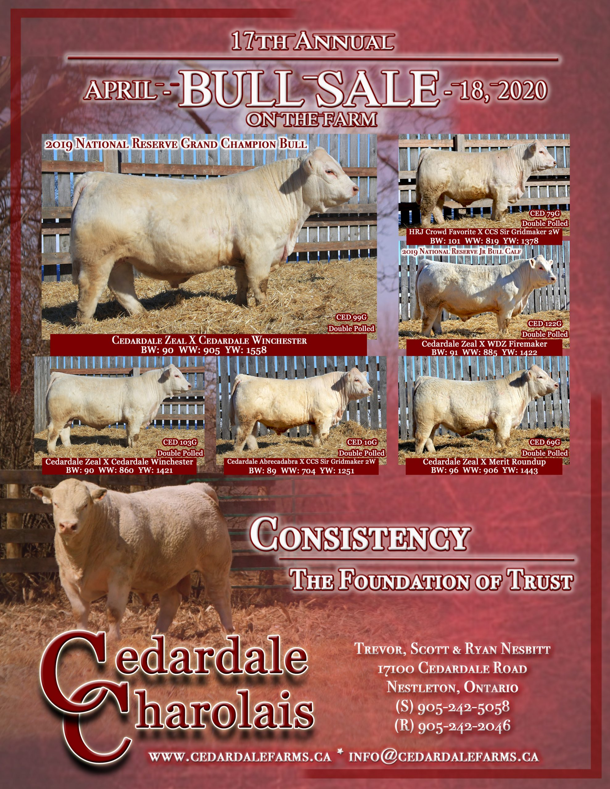Bull Sale 2020 Poster